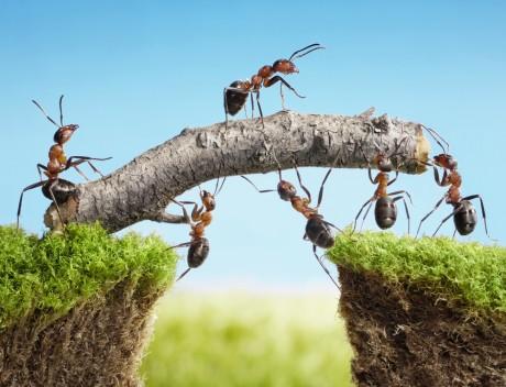 team building mravljice